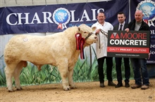 N.I Charollias Cattle Club Show & Sale Overall Champion Monday 6th May 2019